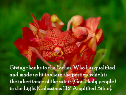 Colossians 1:12 Bible Verse with Orange Orchids from Kaneohe Hawaii